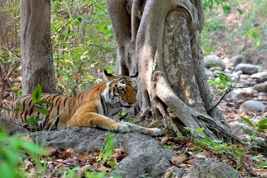 Jim Corbett National Park Uttrakhand India
