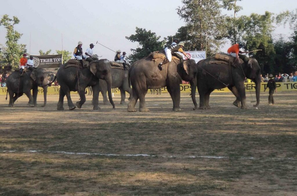Eliphant Polo or Hattipolo Games, Nepal