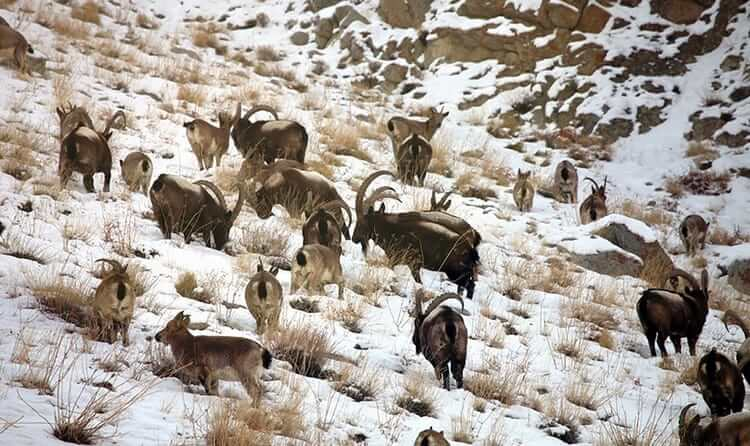 Hemis National Park Ladakh - One of the 10 lesser known places in Jammu and Kashmir