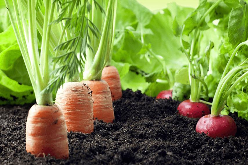 Organic Farming In Sikkim