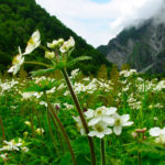 valley-of-flower-uttarakhand-2